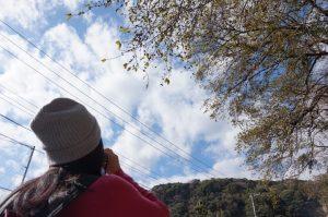 枝の隙間から空を見る