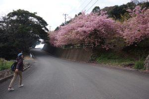 桜の山道2