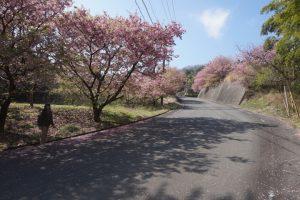 桜の山道3